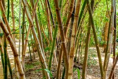Creative photo of a bamboo forest in park stock photo