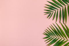 Creative pink background with tropical palm leaves. Creative flat lay top view of green tropical palm leaves millennial pink paper background with pineapples royalty free stock image