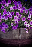 Creative purple petunia. In an old wooden flowerpot Royalty Free Stock Photos