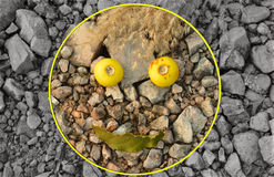 Creative  Smiley Face. This smile is spliced with some wild weeds in the sand Royalty Free Stock Photo
