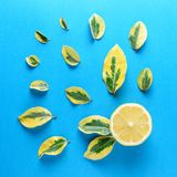 Creative summer pattern made of lemon and green leaves Royalty Free Stock Photos
