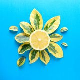 Creative summer pattern made of lemon and green leaves Stock Photo