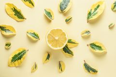 Creative summer pattern made of lemons and green leaves Royalty Free Stock Photography