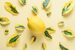 Creative summer pattern made of lemons and green leaves Royalty Free Stock Photo