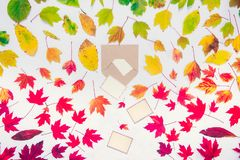 Creative Top view autumn composition - blank cards falling out of the craft paper envelope on fallen leaves gradient colorful rain. Bow background. Template stock photo