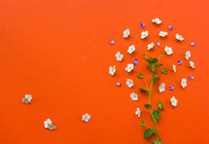 Creative tree made from white flowers on orange background. Yarrow flower.Useful as background Stock Images