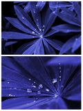 Creative Tropic  blue Leaves Layout stock image