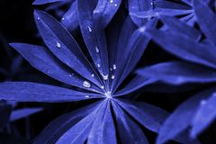 Creative Tropic  blue Leaves Layout royalty free stock photo