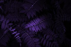 Creative Tropic Purple Leaves Layout royalty free stock photos