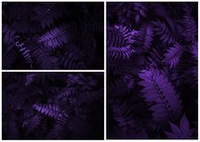 Creative Tropic Purple Leaves Layout royalty free stock photo