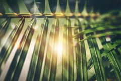 Selective Focus Photography of Green Palm Tree Leaves stock photo