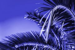 Creative tropical green leaves layout. royalty free stock photos