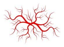 Creative vector illustration of red veins isolated on background. Human vessel, health arteries, Art design. Abstract. Concept graphic element capillaries stock illustration