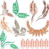 Creative wheat ears, sheafs & hop cones. For design Vector Illustration