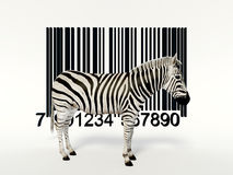 Creative zebra Stock Images