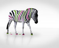 Creative zebra. Creative photo of multicolored striped zebra Royalty Free Stock Photo