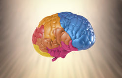 Creativity brain. Creativity concept with 3d rendering colorful brain Stock Photography