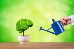 Creativity and brain function growth. Creativity growth, better using brain function and memory improvement concept. Creativity growth represented by tree looks stock photography