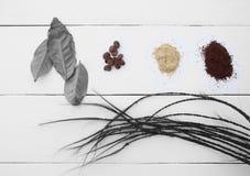 creativo As folhas e os feijões de café em um fundo branco Fotografia de Stock