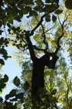 Creatura della foresta Immagine Stock Libera da Diritti