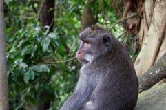 Creatura divertente sveglia della foresta della scimmia immagine stock