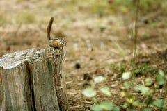 Creature della foresta Fotografia Stock Libera da Diritti