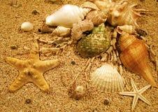 Creature della spiaggia Immagine Stock