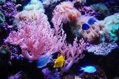 Creature under sea. The colorful creature under sea royalty free stock photos