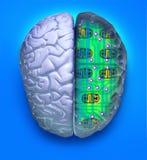 Cérebro azul do computador Imagens de Stock