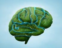 Cérebro verde Fotos de Stock