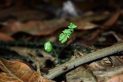 Crecido de la planta Imágenes de archivo libres de regalías