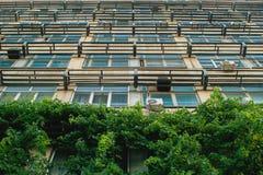 Crecido demasiado con el edificio verde Foto de archivo libre de regalías