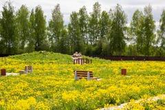 Crecido demasiado con el parque abandonado dientes de león amarillos florecientes Imagen de archivo libre de regalías