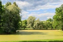 Crecido demasiado con la charca de la lenteja de agua con los árboles grandes en la orilla Imagen de archivo libre de regalías