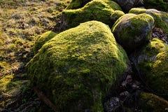 Crecido demasiado con las piedras del musgo Fotografía de archivo