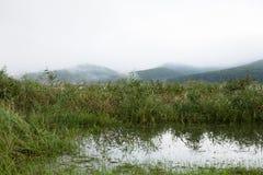 Crecido demasiado del lago cercano de lámina Imagenes de archivo