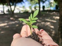 Creciendo una planta, dando y consolidando el árbol que crece en suelo fértil Foto de archivo