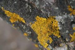 crecimiento amarillo en el árbol foto de archivo