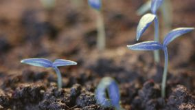 Crecimiento azul de las plantas Fondo surrealista futurista germinaci?n Mundo maravilloso moderno de Unearthy Tierra del planeta almacen de metraje de vídeo