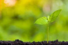Crecimiento cada vez mayor del negocio y cultivo financiero de plantas de monedas en las botellas de cristal en fondo verde imágenes de archivo libres de regalías
