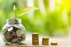 Crecimiento cada vez mayor del negocio y cultivo financiero de plantas de monedas en las botellas de cristal en fondo verde imagen de archivo