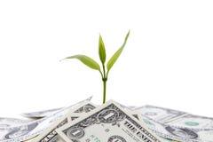 Crecimiento de dinero foto de archivo