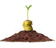 Crecimiento de dinero. imagenes de archivo