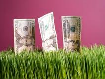 Crecimiento de dinero Imágenes de archivo libres de regalías