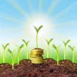 Crecimiento de dinero. Foto de archivo libre de regalías