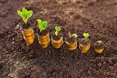 Crecimiento de dinero cientos cuentas de dólar que crecen en la hierba verde Imagenes de archivo