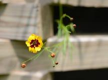 Crecimiento de flor hacia abajo con madera en fondo Foto de archivo