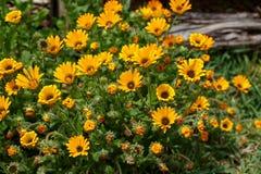 Crecimiento de flor hermoso entre todos los succulents Foto de archivo libre de regalías