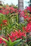 Crecimiento de flor rojo hermoso de la orquídea en el jardín fotos de archivo