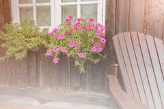 Crecimiento de flor rosado por la ventana Fotografía de archivo libre de regalías
